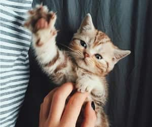 kitten, yes, and cute image