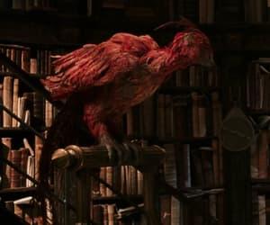 bird, books, and film image