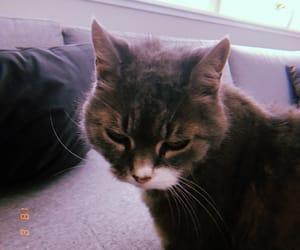 cat, norway, and huji image