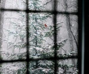 snow, winter, and windows image