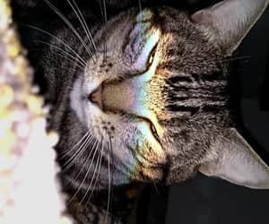 cat, kitten, and felino image