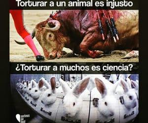 Animales, veganismo, and tortura image