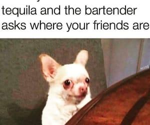 meme drinking image