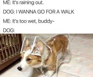 meme dog funny image
