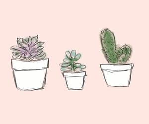 cactus, pretty, and succulents image