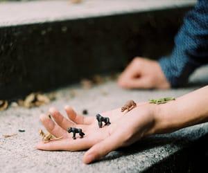 animal, vintage, and 35mm image