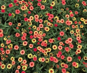 flowers, red, and green image