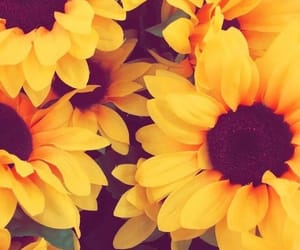 flowers, sunflower, and yellow image
