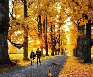 autumn, couple, and dogs image