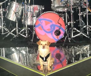 dog, 5sos, and meet you there tour image