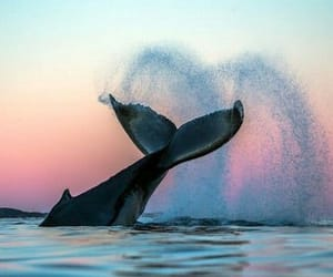whale, nature, and ocean image