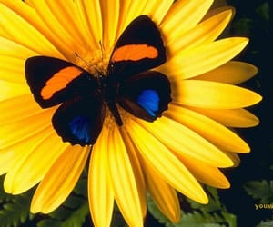 beautiful, butterfly, and yellow image