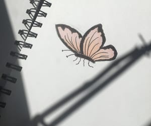 butterfly, pink, and shadow image
