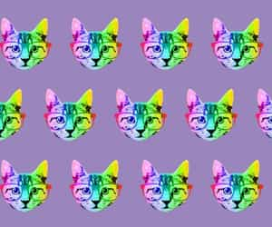 background, cats, and colors image