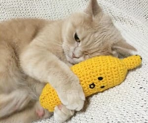 cat, banana, and animal image