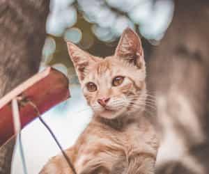 red cat image