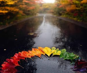 autumn, dark red, and drops image