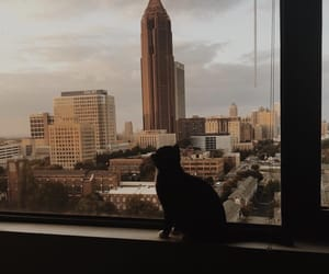 buildings, cat, and city image