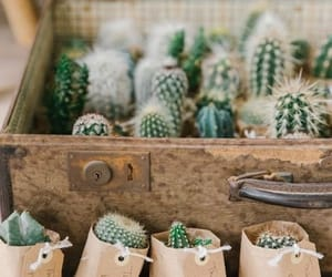 cactus and flowers image