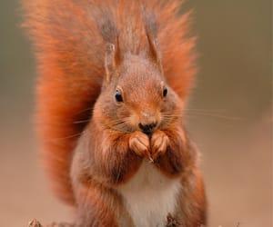 autumn, squirrel, and cute image