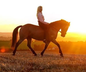 equine, gallop, and heart image