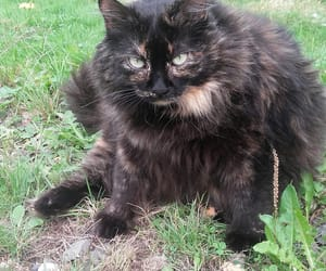 cat, fluffy, and green eyes image