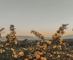 background, flowers, and inspiration image