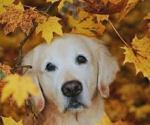 dog, animals, and autumn image