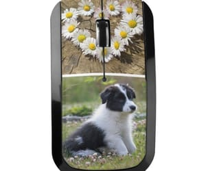 border collie, dogs, and mouse image