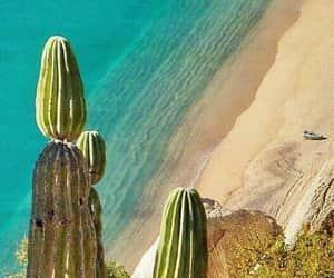 arena, cactus, and california image
