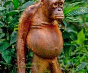animal, apes, and monkey image
