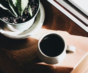coffee, delicious, and plant image