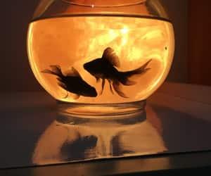 fish, light, and animal image