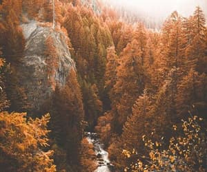 autumn, leaves, and autumn forest image