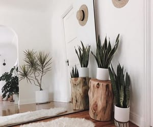 decoration, plants, and design image