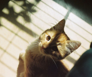 cat, photography, and light image