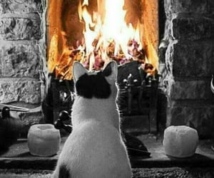 cosy, kitty, and warm image