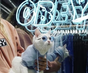blue, sunglasses, and cat image