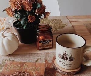 autumn, pumpkins, and vibes image