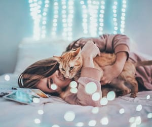 bed, cat, and lights image