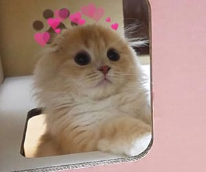 fluff, fluffy, and cute cats image