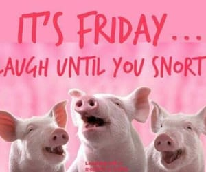 friday, pigs, and pink image