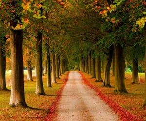 autumn colors, belgium, and landscape photography image