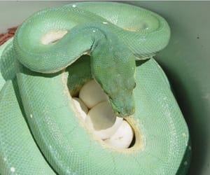 aesthetic, green, and snake image