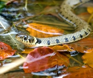 autumn colors, reptile, and fall leaves image