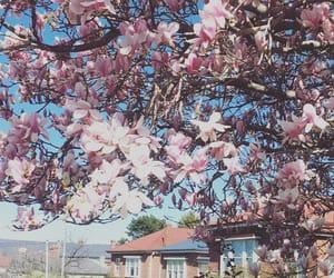fiori, albero, and flowers image