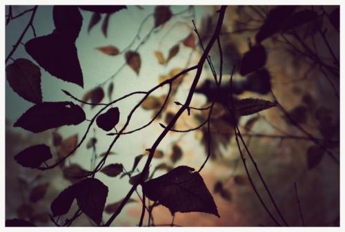 Image by iris