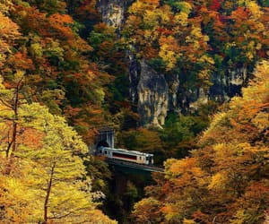 autumn colors, train, and colorful image