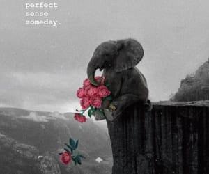 background, black, and elephant image