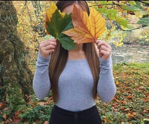 autumn and leaves image